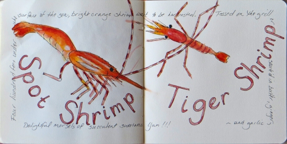 PWS Shrimp sketch
