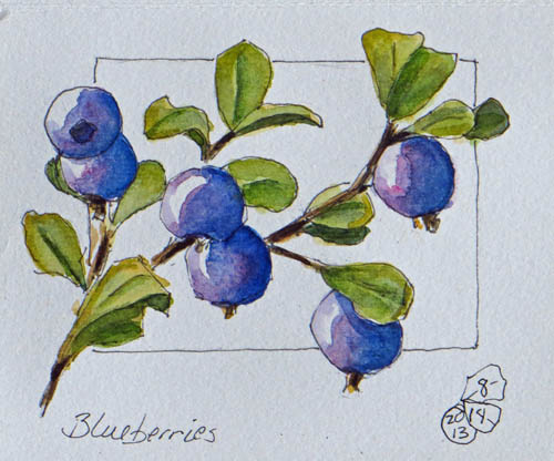 I nibbled on nearby berries as I sketched these, then I ate them!