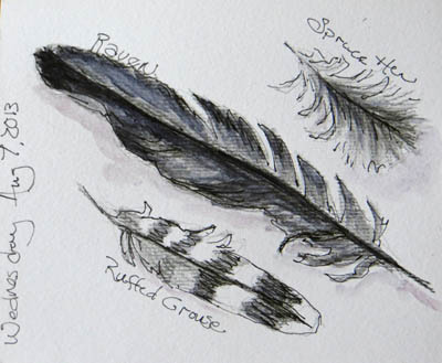 A few feathers I found recently