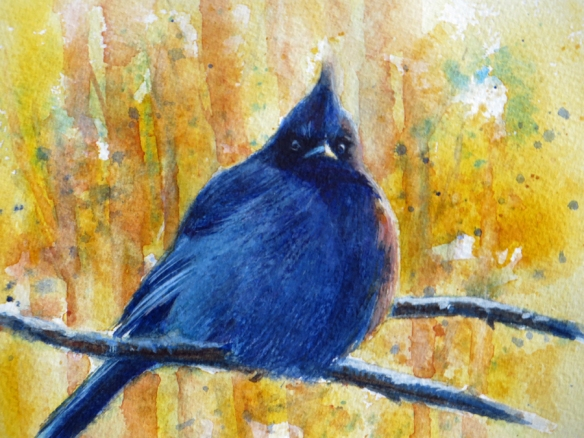 Stellar Jay Watercolor